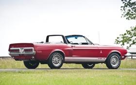 Обои небо, трава, красный, Mustang, Ford, Shelby, Форд