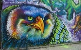 Картинка стена, птица, граффитти