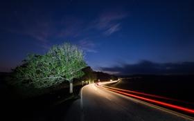 Обои дорога, ночь, огни, дерево