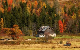 Обои поле, осень, лес, природа, дом, фото, трактор