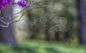 Картинка цветы, дерево, боке