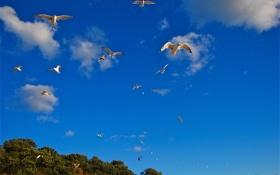 Обои небо, облака, птицы, чайка