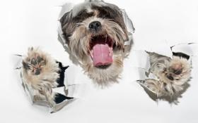 Картинка бумага, друг, собака