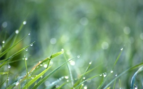 Обои капли, трава, боке