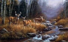 Обои лес, пейзаж, туман, река, ручей, октябрь, живопись