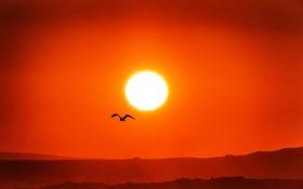 Картинка закат, небо, солнце, птица, природа, силуэт, горы