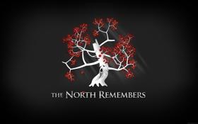 Обои листья, дерево, минимализм, Game of Thrones, игра престолов, север помнит, the north remembers