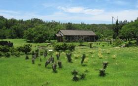 Картинка лес, лето, пейзаж, природа, фото, поляна, домик