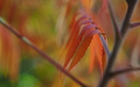Обои листья, осень, ветка