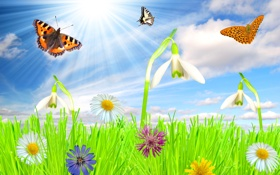 Обои облака, трава, небо, солнце, лето, луг, бабочка