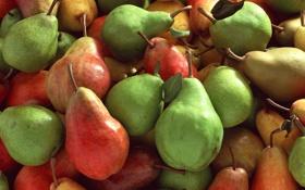 Обои краски, урожай, фрукты, груши