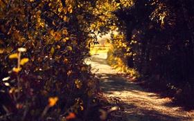 Обои тропа, осень, кусты