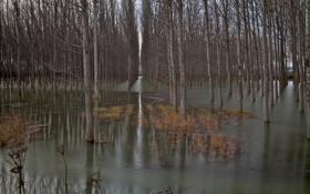 Картинка лес, деревья, весна, половодье