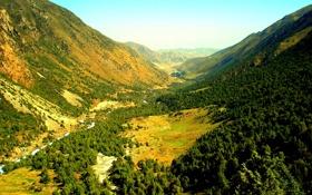 Обои лес, горы, далина