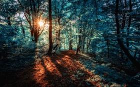 Картинка лес, природа, цвет