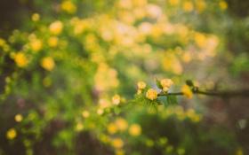 Обои цветы, ветка, желтые, лепестки