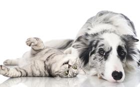 Картинка животные, собаки, кошки, cat, dog, animal, Friendship