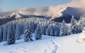 Обои зима, снег, деревья, горы, следы, природа, елки
