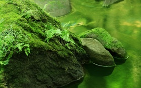 Обои реки, камни, река, природа, растения, лес, вода