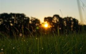 Картинка лето, трава, солнце, капли, роса, утро
