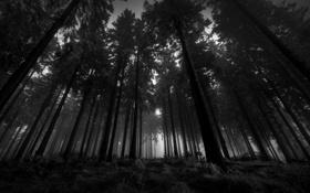 Картинка деревья, ветки, леса, природа дерево