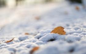 Картинка макро, снег, природа, лист