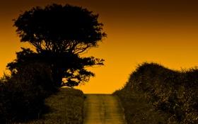 Картинка дорога, небо, деревья, холм, зарево, кусты