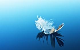 Обои отражение, фон, перо, голубой