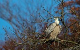 Обои ветки, дерево, птица, гриф