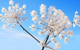 Картинка небо, снег, растение