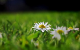 Обои цветок, трава, макро, цветы, природа, цветки, фото цветов