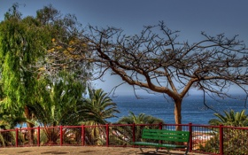 Обои лавочка, сухое дерево, пальмы, море
