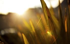 Картинка паутинка, травинки, солнце, свет, лучи, в траве