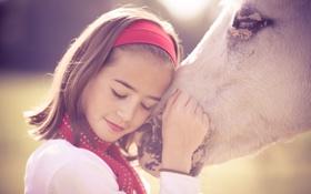 Обои любовь, девочка, забота, привязанность, нежная, White beautiful horse