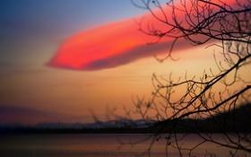 Обои небо, закат, природа, ветка, облако
