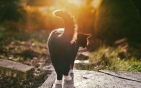 Обои кошка, кот, черно-белый, лапки, хвост