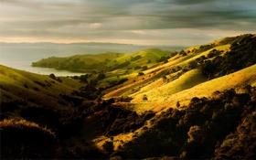 Картинка море, деревья, холмы