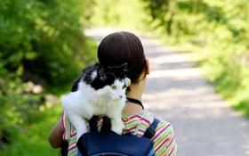 Обои кошка, девушка, фон, обои, настроения, брюнетка
