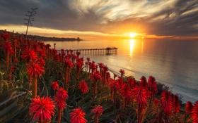 Картинка море, закат, побережье, причал, пирс, красные, США