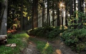 Обои дорога, лес, солнце, лучи, бревна