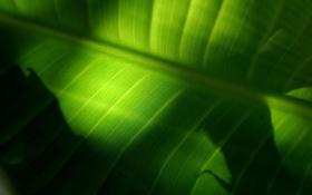 Картинка листья, макро, лист, фото, листок
