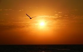 Обои море, небо, солнце, чайка, горизонт, силуэт