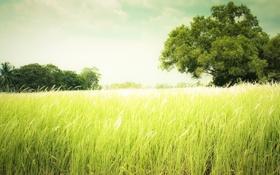 Обои трава, деревья, лето, луг, поле, зелень