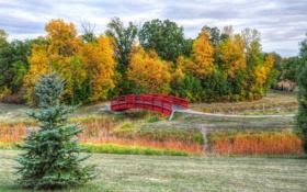 Картинка осень, небо, трава, деревья, мост, парк