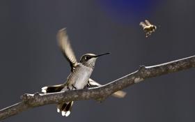 Картинка природа, птица, ветка