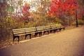 Картинка листья, деревья, парк, путь, скамейки