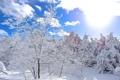 Картинка зима, небо, солнце, облака, снег, деревья