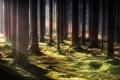 Картинка лес, лучи, свет, природа, стволы, мох