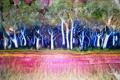 Картинка деревья, корни, картина