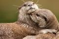 Картинка любовь, две, обнимаются, выдры